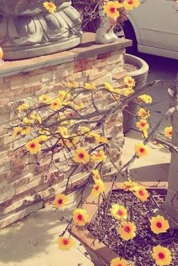15. Yellow Cherry Blossoms